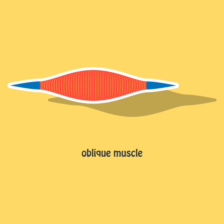 Sticker External Oblique muscles of chest, thorax, brisket, breast, bust - didactic board of anatomy of human muscular system Illustration