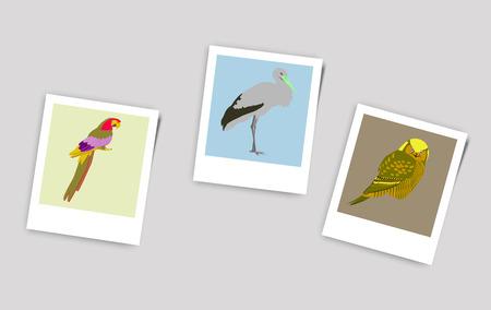 Illustration Polaroid Photo of Stork owl parrot