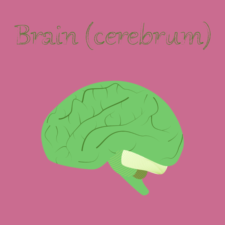 human organ icon in flat style brain