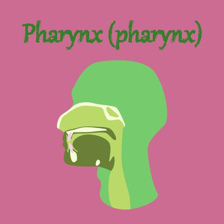 human organ icon in flat style pharynx Vector Illustration