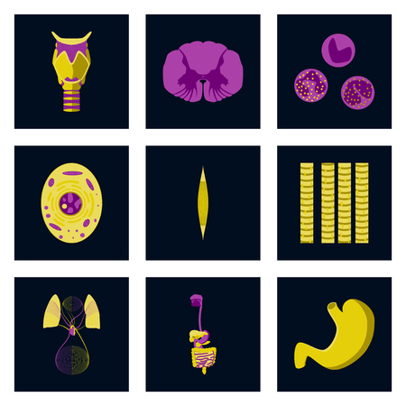 icons set in flat style human biology Illustration