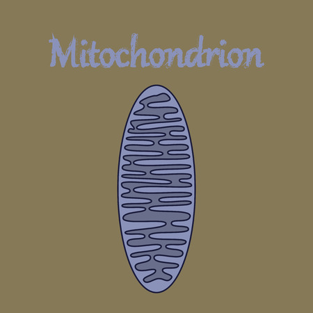 icon in flat style mitochondrion Illustration