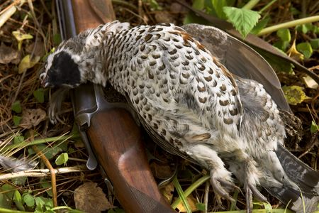 Old gun and the hazel grouse