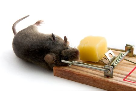 The mouse caught in a mousetrap Stock Photo - 2626315