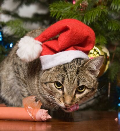 Cat with sausage on a background of a christmas fur-tree
