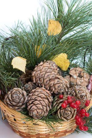 guelderrose: Cedar cones, branches of a cedar and a guelder-rose