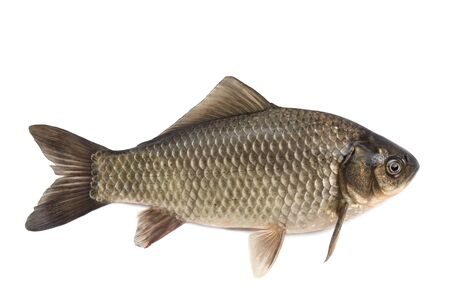 Crucian- it is isolated on a white background