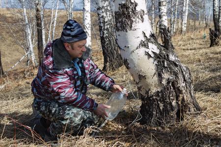 gathers: l'uomo nel bosco raccoglie linfa di betulla Archivio Fotografico