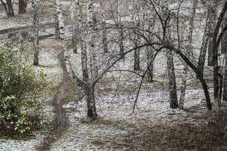 snow falls: The first snow falls asleep path near the house