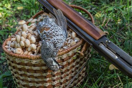 game bird: game bird, mushrooms in a basket and a shot-gun