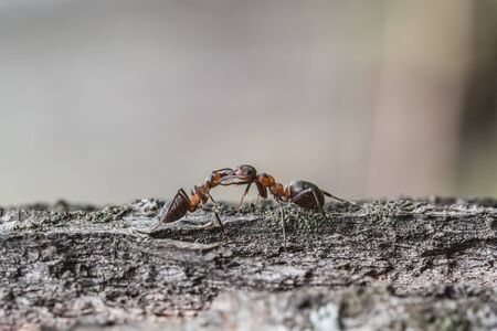 Two ants on the bark of a tree