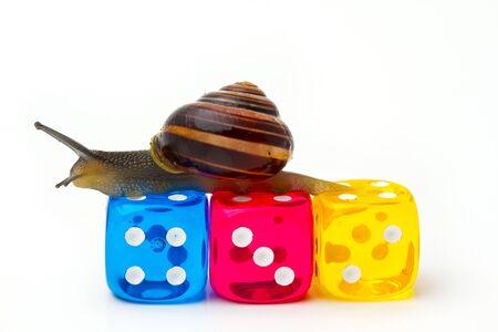 Snail on Dice
