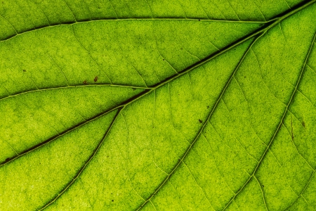 Closeup of green leave