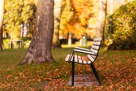 Park bench in the autumn covered with leaves