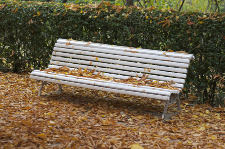bench covered in autumn leaves in a park photo