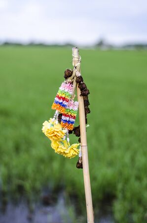 toran: The garland that farmer used to sacrifice rice field Stock Photo