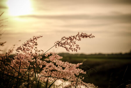 Vintage style wild florwers and grasses in sunset photo