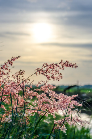 Wild florwers and grasses in sunset photo