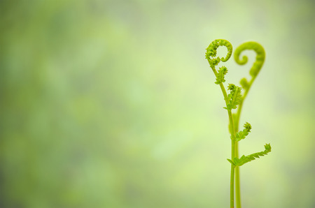 twice: Close up and selective focus to a front object and have blur a far object of shoots of ivy align to heart sign, abstract back for valentines day Stock Photo
