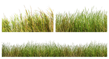 An isolated image of green color wild grasses on white background Banco de Imagens