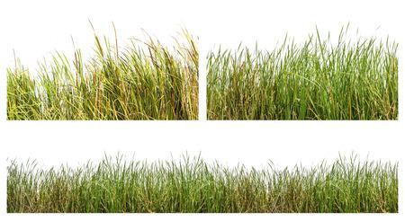 Een op zichzelf staand beeld van groene kleur wilde grassen op een witte achtergrond