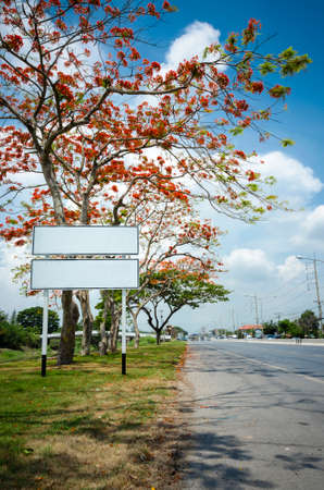 full filled: An image of blank traffic sign which place under beautiful tree which full filled with red flower beside a road
