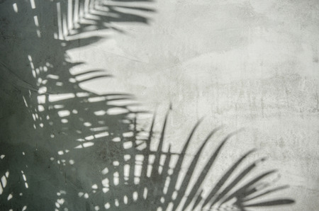 An image of palm leaf shadow on the wall 免版税图像 - 43275589