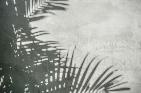 Een beeld van palmbladeren schaduw op de muur
