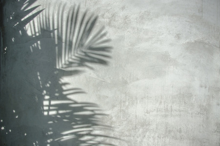 black   shadow: An image of palm leaf shadow on the wall