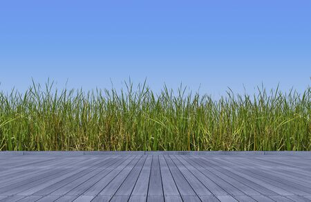 d rendering wooden floor and green color wild grasses and sky