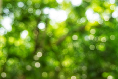 Abstact defocus bokeh light background made of forest style,Beautiful background image.