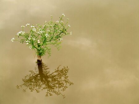 haiku: Bonsai reflection of the mini plant Stock Photo
