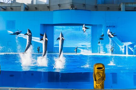 YOKOHAMA,JAPAN MARCH 13,2019 Dolphins jumping in the air at Hakkeijima Sea Paradise Show with three trainers at the background 新闻类图片