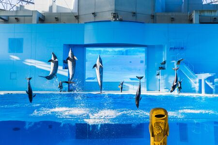 YOKOHAMA,JAPAN MARCH 13,2019 Dolphins jumping in the air at Hakkeijima Sea Paradise Show with three trainers at the background Editorial
