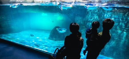 YOKOHAMA,JAPAN MARCH 13,2019 Family standing and looking at a group of Emperor penguins in the display area at Hakkeijima Sea Paradise aquarium museum Standard-Bild - 135910097
