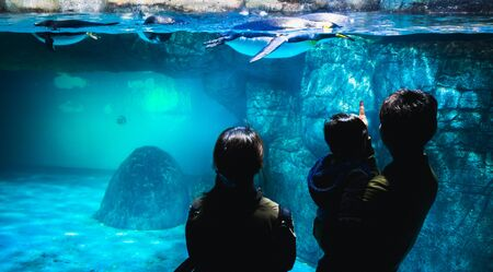 YOKOHAMA,JAPAN MARCH 13,2019 Family standing and staring at a group of Emperor penguins in the display area at Hakkeijima Sea Paradise aquarium museum Standard-Bild - 135910099