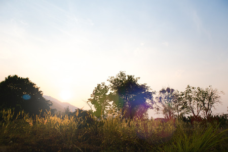 Medow Grass and tree in the sunrise sky with mountain  landscape background and sun flare