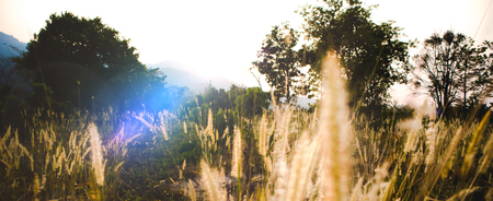 Medow Grass and tree in the sunset with mountain background Banco de Imagens