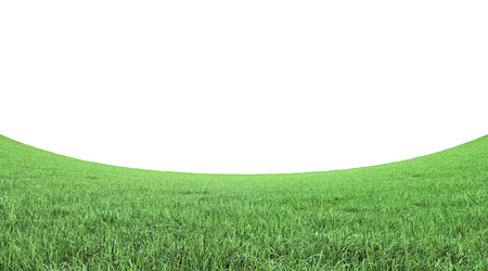 green grass field on white background 3D rendering with copy space.Fisheye lens effect