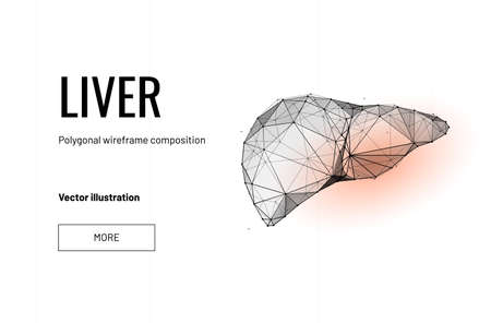 Liver organ. Low poly wireframe style. Technology in medicine. Abstract illustration isolated on white background. Particles are connected in a geometric silhouette