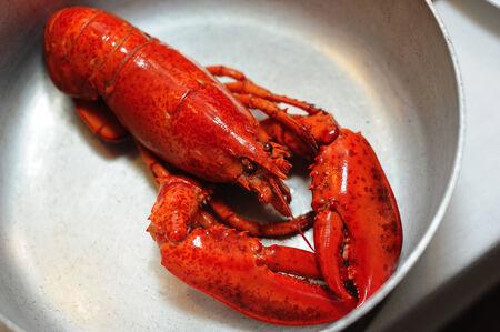 dinne: lobster put on the pot