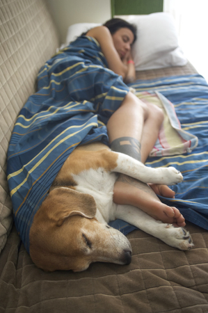 Girl sleeping on the sofa with her beagle dog  版權商用圖片