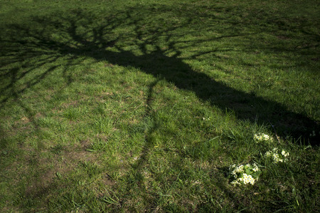 Eerie shadow of tree on meadow