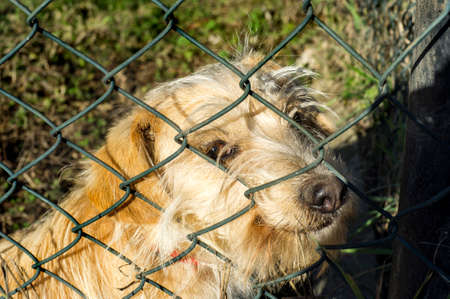 cute dog with his nose out of the fence ready to receive a caress