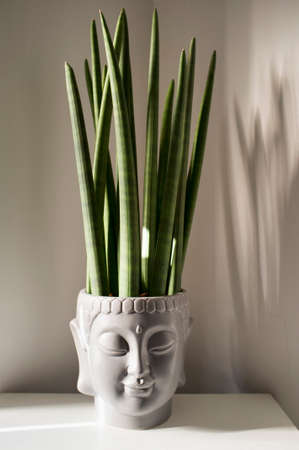 decorative gray Buddha head planter, with plant, that create a calming atmosphere 免版税图像