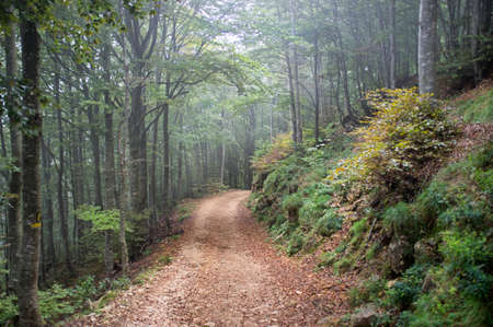 autumn hiking trail in the Italian mountain forest