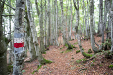 hiking trail in the Italian mountain forest with a hiking mark on the tree, red and white