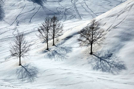 Beautiful outdoor landscape with lonely trees and footprints in the snow winter season 免版税图像