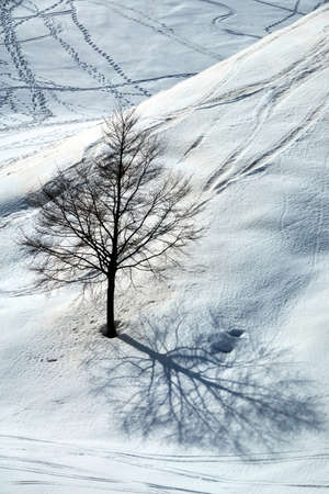 Beautiful outdoor landscape with lonely tree and footprints in snow winter season