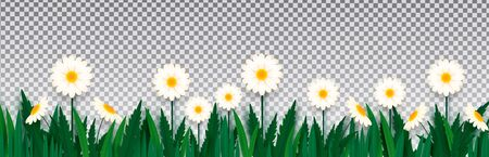 White daisies in grass on isolated on transparent background. Paper style. Template for banner, poster, presentation.